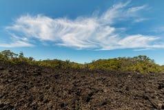 Lava field on Rangitoto Island Royalty Free Stock Image