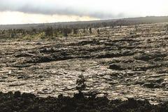 Lava field slope, Big Island, Hawaii. Lava field slope with trees, Big Island, Hawaii Stock Photography