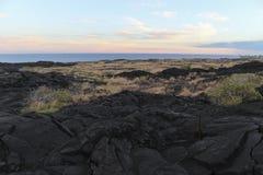 Lava field slope, Big Island, Hawaii. Lava field slope with trees, Big Island, Hawaii Royalty Free Stock Images