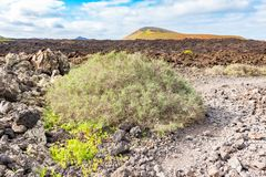 Lava field and tourist road trail to vulcano Caldera Blanca, Lanzarote, Canary Islands, Spain.  stock photo