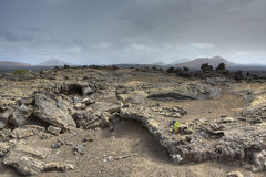 Lava fields Stock Images