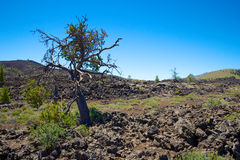 Lava Fields in Craters of the Moon Royalty Free Stock Photos