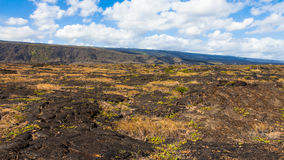 Lava Fields Panorama. Panorama of frozen lava in Volcanoes National Park in Hawaii, Big Island Royalty Free Stock Photo