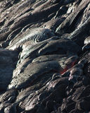Lava Flow Stock Image