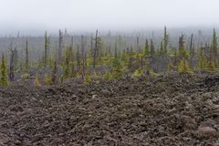 Lava Flow e foresta rada alla sommità di McKenzie immagine stock libera da diritti