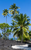 Lava-Fluss- und Palmen Lizenzfreies Stockfoto