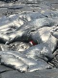 Lava havaiana fotos de stock