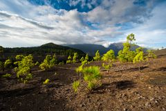 Lava landscape on the Cumbre Nueva in La Palma Stock Images