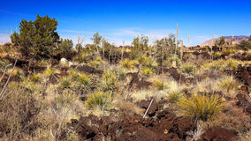 Lava Landscape at Valley of Fires Recreation Area in New Mexico Royalty Free Stock Images