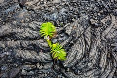 Lava. Flow on Big Island, Hawaii Royalty Free Stock Image