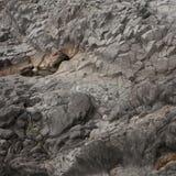 Lava preta Imagem de Stock
