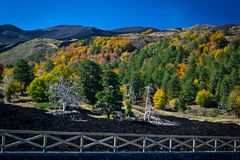 Lava river lined with trees with colorful autumn leaves at the foot of Etna volcano Royalty Free Stock Photography