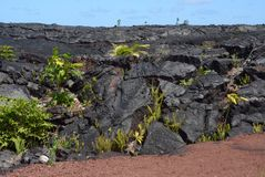 Lava Rock Growth. Plants growing out of the lava rock from a flow on South Shore of the Big Island of Hawaii Stock Photography