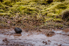 Lava rock in a stream Royalty Free Stock Image