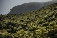 Lava Rocks cubierto de musgo, Islandia Fotografía de archivo libre de regalías