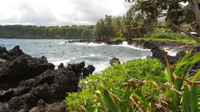 Lava Rocks, Plants and Choppy Sea Stock Images