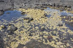 Lava rocks and white coral Stock Images