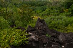Lava stone formation into the bush in the natural park of curieuse island, Seychelles. Landscape view of the Lava stone formation into the bush in the natural stock photo