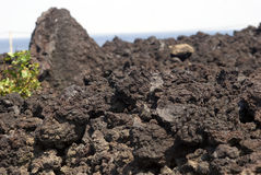 Lava stone, Miyake Island, Japan Stock Images