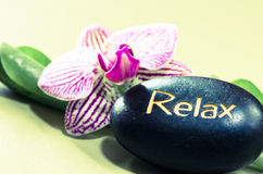 Lava stone and orchid Royalty Free Stock Photo