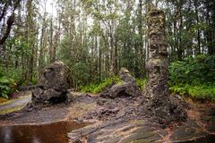 Lava Tree State Monument, Big Island, Hawaii Stock Image