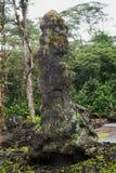 Lava Tree Stock Photography
