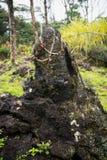 Lava Tree Stock Image