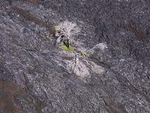 Lava vaggar bildande i Hawaii Volcano National Park Arkivfoto