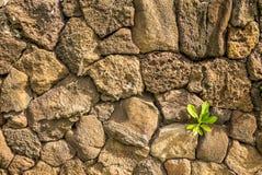 Lava Wall Fotografia de Stock Royalty Free