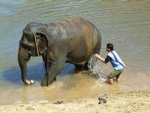 Lavado del elefante, Tailandia Fotos de archivo