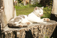 Lavado del gato Fotos de archivo libres de regalías