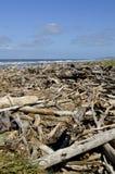 Lavado encima de la madera de deriva en la playa imagen de archivo