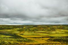 Lavafältet på Eldhraun, Island Lavafält som täckas med grön svampig mossa Ovanlig natur Norra polcirkeln Riden cirkel Arkivfoton
