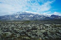 Lavafeld in Island stockfoto