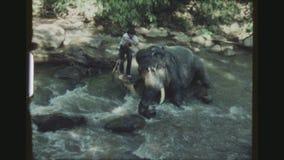 Lavage d'éléphant banque de vidéos