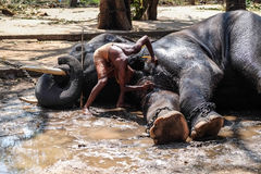 Lavage d'éléphant Photographie stock