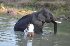 Lavage d'éléphant photo libre de droits