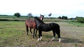lavage d'amour de cheval Images libres de droits