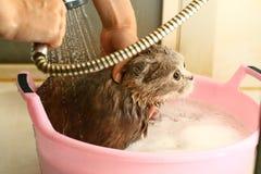 lavage de chat Photographie stock libre de droits