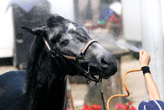 Lavage de cheval image stock