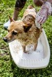 Lavage de chien Photographie stock libre de droits