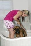 Lavage de chien de boxeur Photographie stock libre de droits