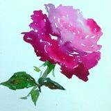 Lavage humide texturisé coloré de fleur de fond d'art d'aquarelle de rose de nature de symbole romantique rose d'amour brouillé Image libre de droits