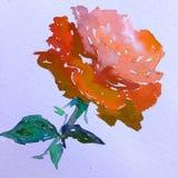 Lavage humide texturisé coloré de fleur de fond d'art d'aquarelle de rose de nature de symbole romantique rose d'amour brouillé Photographie stock libre de droits