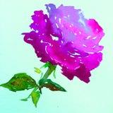 Lavage humide texturisé coloré de fleur de fond d'art d'aquarelle de rose de nature de symbole romantique rose d'amour brouillé Photographie stock