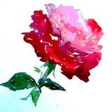 Lavage humide texturisé coloré de fleur de fond d'art d'aquarelle de rose de nature de symbole romantique rose d'amour brouillé Photos libres de droits