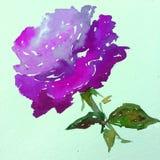 Lavage humide texturisé coloré de fleur de fond d'art d'aquarelle de rose de nature de symbole romantique rose d'amour brouillé Photo libre de droits