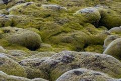 Lavagebied met mos wordt behandeld dat stock foto