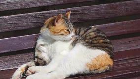 Lavagem bonito do gato em um banco em um dia ensolarado video estoque