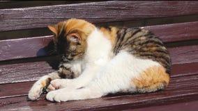 Lavagem bonito do gato em um banco em um dia ensolarado filme